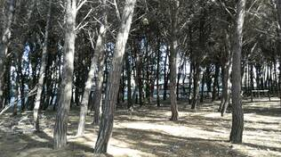 Pineta Marinella