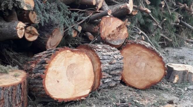 alberi tagliati a madonna dei cieli