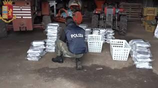 arresto rocco molè per droga