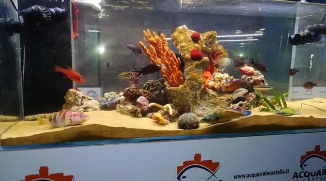 acquario isola di capo rizzuto