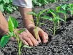 Agricoltura biologica psr calabria