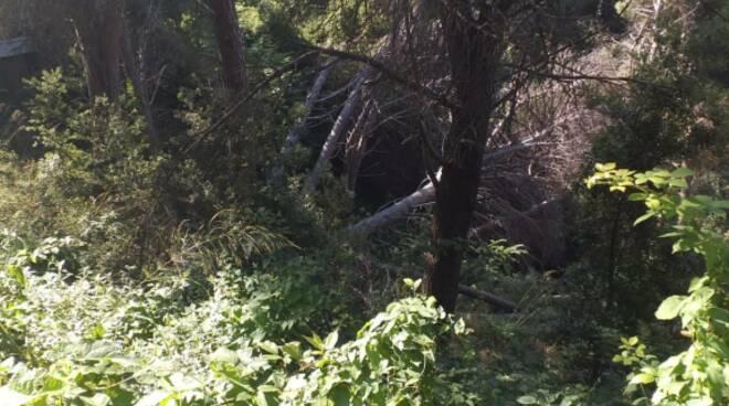commissione ambiente alberi pineta siano
