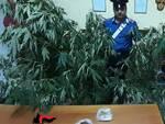 controlli antidroga arrestato 66enne a squillace