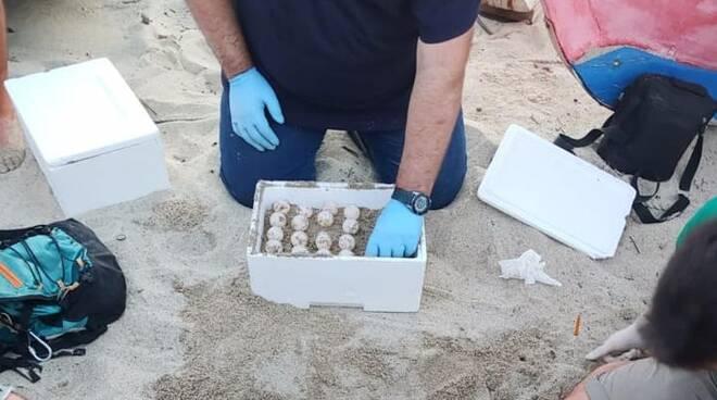 uova di tartaruga trovate sulla spiaggia a Soverato