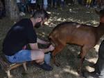 mungitura capra