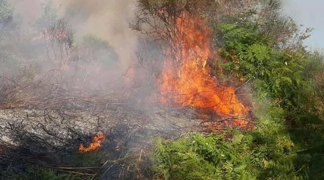 incendio carlopoli