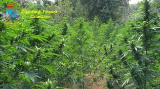 cannabis finanza