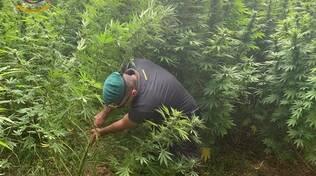 Sequestro Cannabis Finanza