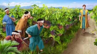 lavoratori vigna vangelo