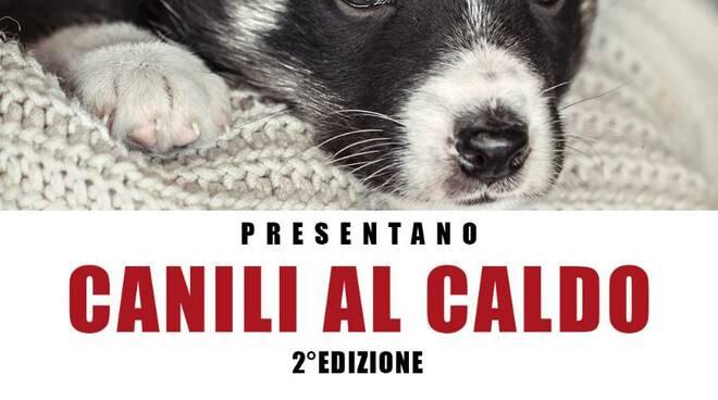 canilialcaldo