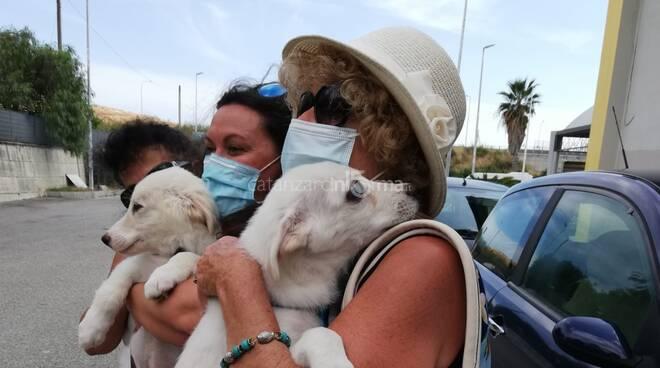 cuccioli abbandonati trovano famiglia a cropani