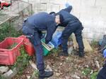 arrestato 40enne a platania
