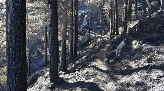 bosco bruciato reventino